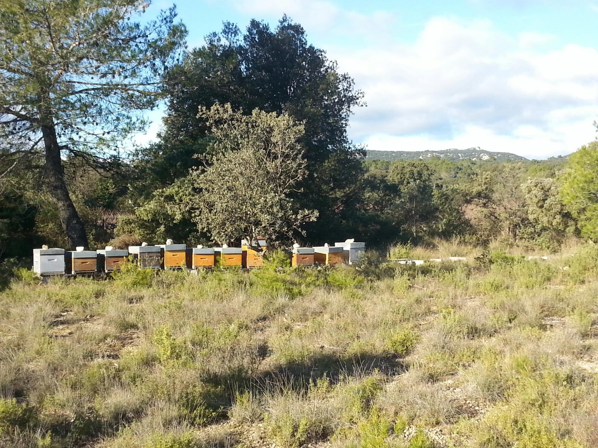 apiculteur quissac